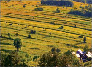 Hillside Fields (Meadows) 15