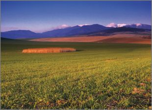 Hillside Fields (Meadows) 4