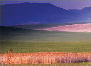 Hillside Fields (Meadows) 6